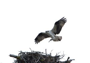 Bringing Twig to Nest